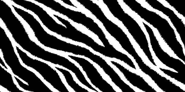 illustrations, cliparts, dessins animés et icônes de modèle sans couture avec imprimé zèbre. illustration vectorielle. texture de fourrure animale. - tigre