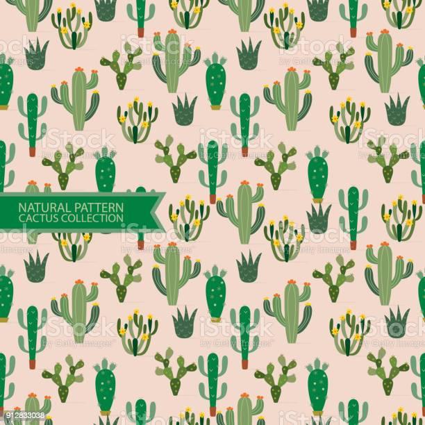 Seamless patternnatural patterncactus plantdesert background vector id912833038?b=1&k=6&m=912833038&s=612x612&h=rm2gy6qpdmx2c87ton4ks pw0u7vg47fwj1g lztm2u=