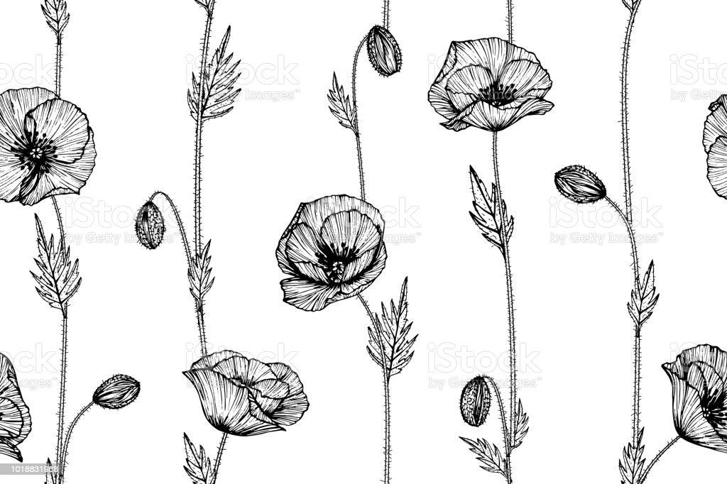 Seamless poppy flower pattern background black and white with seamless poppy flower pattern background black and white with drawing line art illustration royalty mightylinksfo