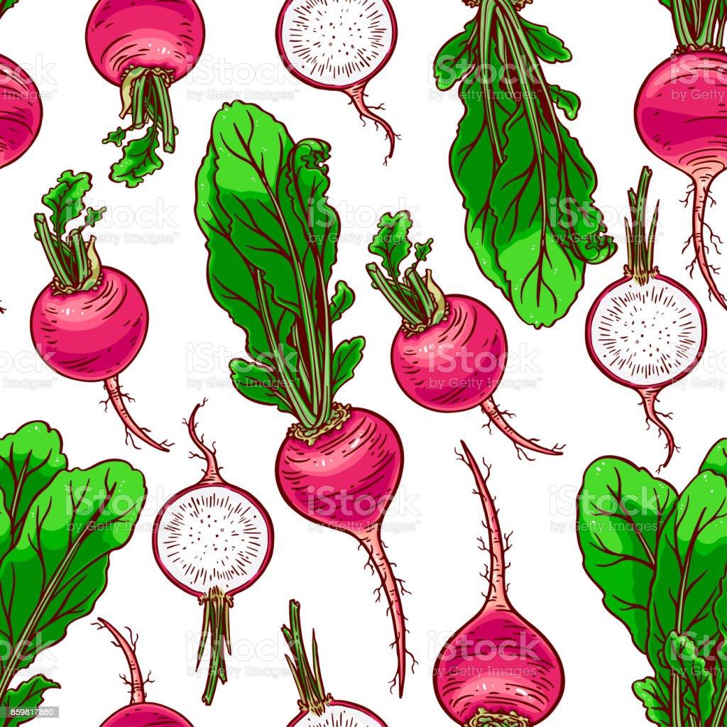 seamless ripe radish vector art illustration