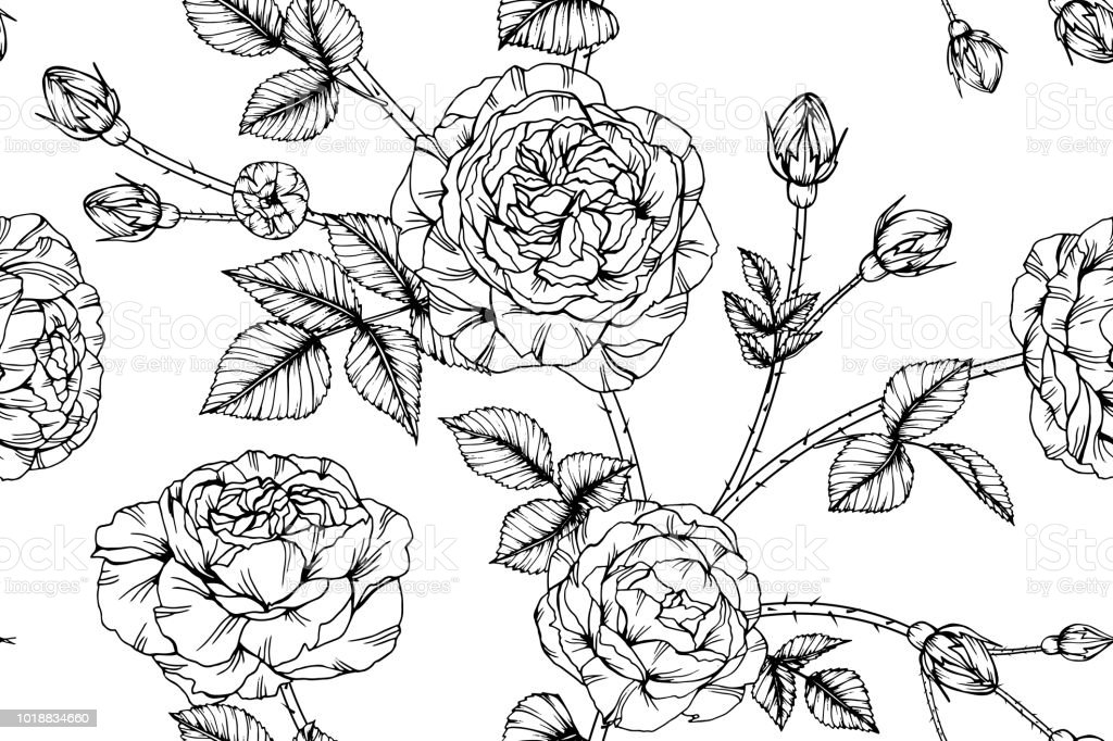 Seamless Rose Flower Pattern Background Black And White With Drawing ...