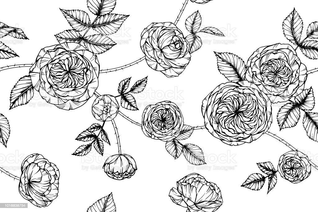 Sans Couture Rose Fleur De Fond Noir Et Blanc Avec Dessin