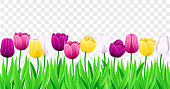 Seamless Row Of Vector Colorful Tulips With Leaves. Set Of Isolated Spring Flowers. Collection Of Beautiful Multi-Color Tulip Buds And Blooming Flowers For Festive Design, Transparent Background.