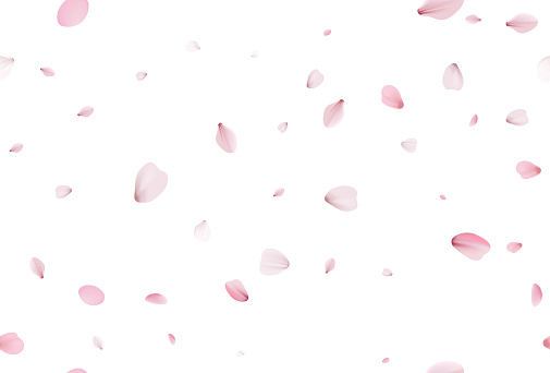 Seamless sakura petals. Falling realistic cherry petals. Spring and summer sakura seamless pattern
