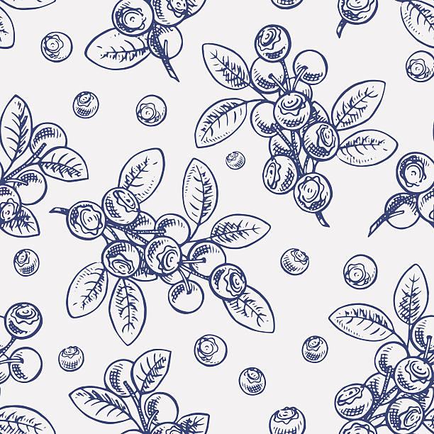 illustrazioni stock, clip art, cartoni animati e icone di tendenza di semplice schizzo di mirtilli - mirtilli