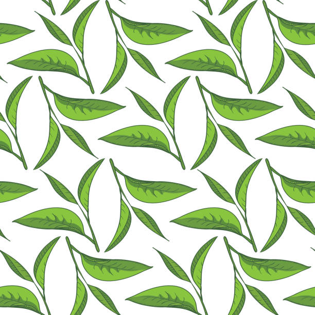 illustrazioni stock, clip art, cartoni animati e icone di tendenza di seamless pattern di tè - camellia sinensis