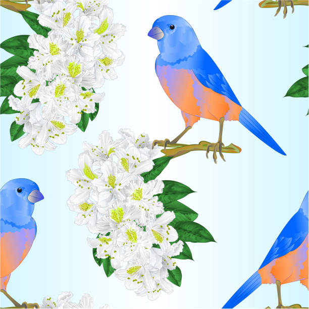 Bird Chirping Pictures Illustrations, Royalty-Free Vector ... (612 x 612 Pixel)