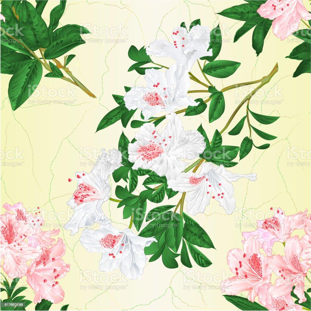 Texture Transparente Branche Lumineuse Rose Et Blanc Fleurs