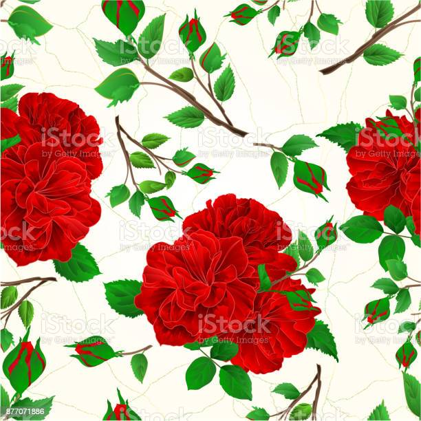 Seamless texture buds red roses and buds cracks in the porcelain vector id877071886?b=1&k=6&m=877071886&s=612x612&h=sjllskimtkvbwamnxcsdzfcbbnx6emv coqkaxaeruc=