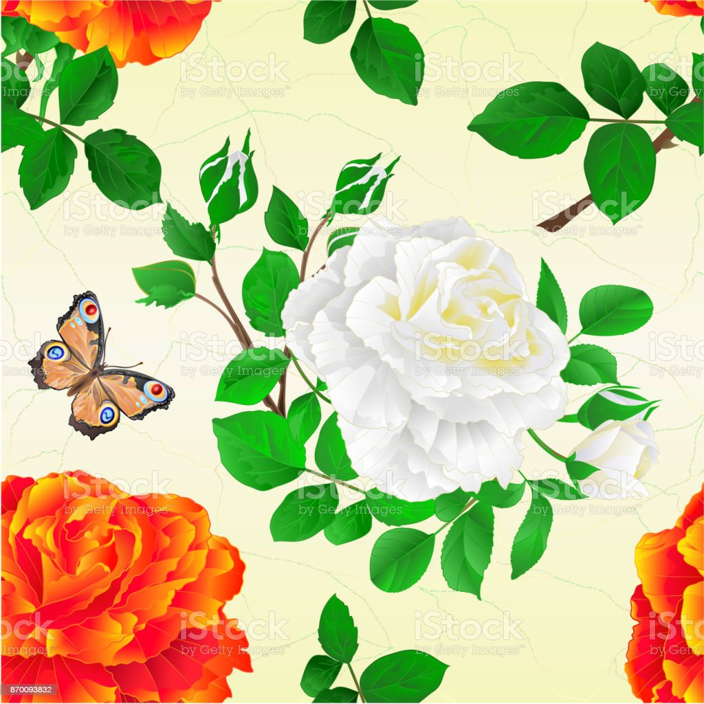 Perfecta Textura De La Flor Naranja Y Blanco Color De Rosa Y Una ...