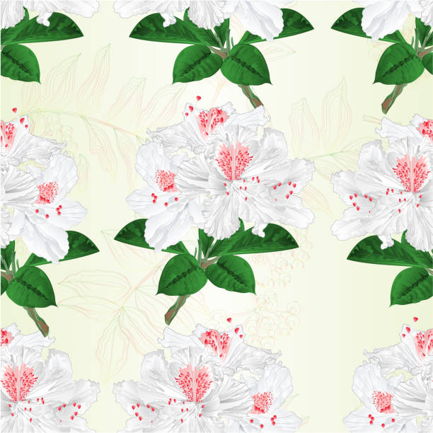 illustrazioni stock, clip art, cartoni animati e icone di tendenza di seamless texture flowers white rhododendrons twig mountain shrub vintage vector illustration editable - impollinazione