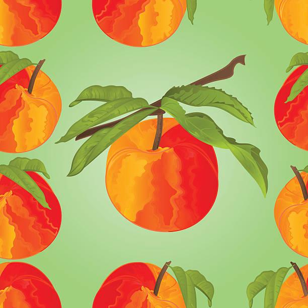 nahtlose textur mit verlässt vektor-pfirsich - nektarinenmarmelade stock-grafiken, -clipart, -cartoons und -symbole