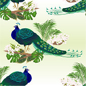 Seamless texture Peacock beauty exotic bird natural and tropical flowers watercolor vintage vector illustration editable