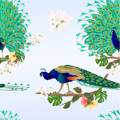 Seamless texture Peacocks  tropical birds on branch with hibiscus vector