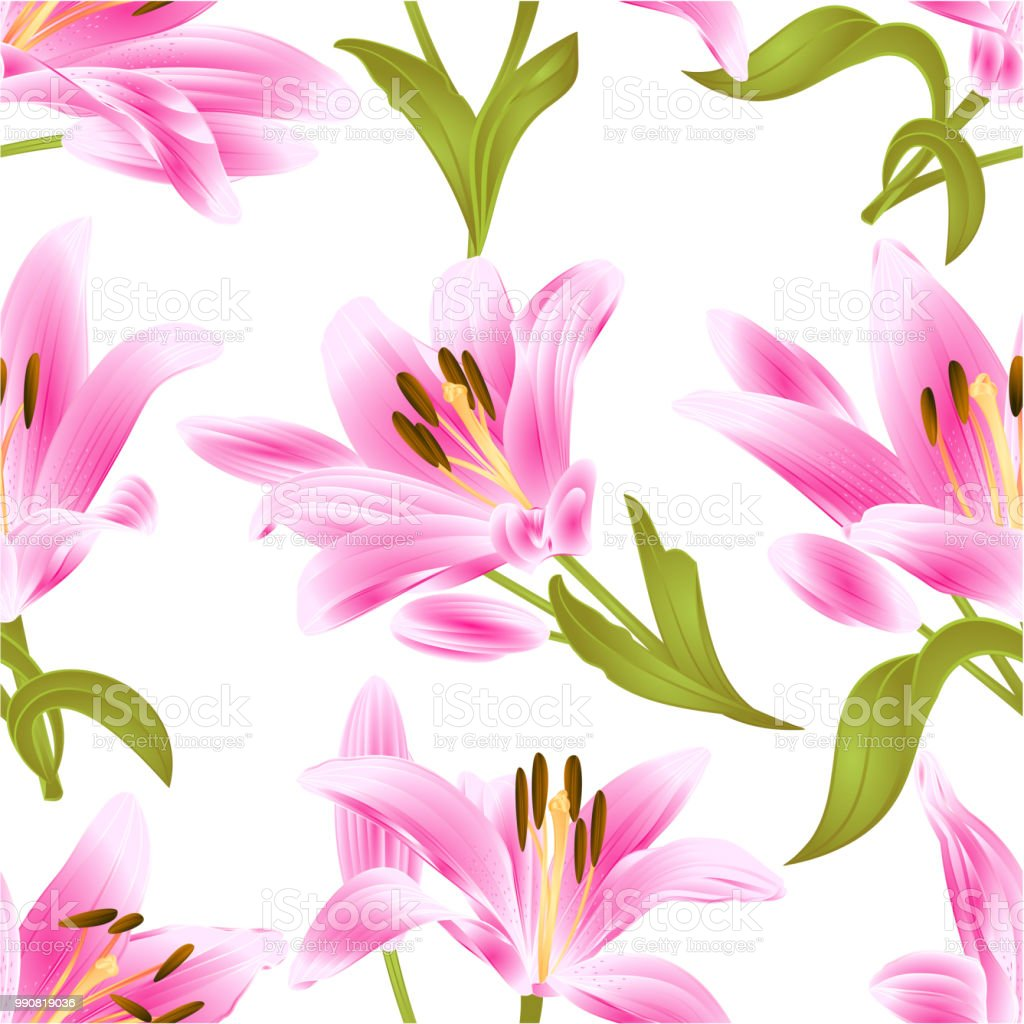 Seamless Texture Pink Lily Lilium Candidumflower With Leaves And Bud