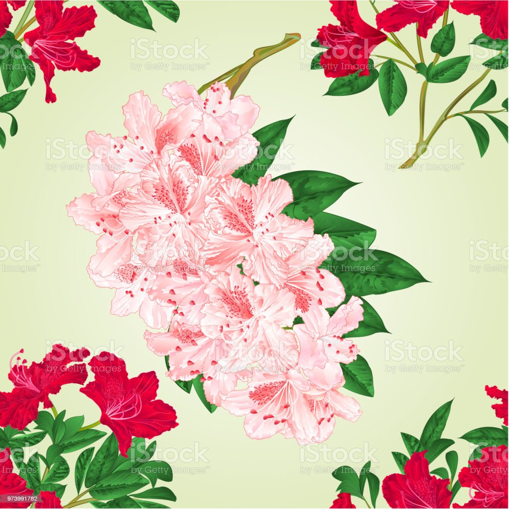 Seamless Texture Rhododendrons Twigs With Red And Light Pink Flowers