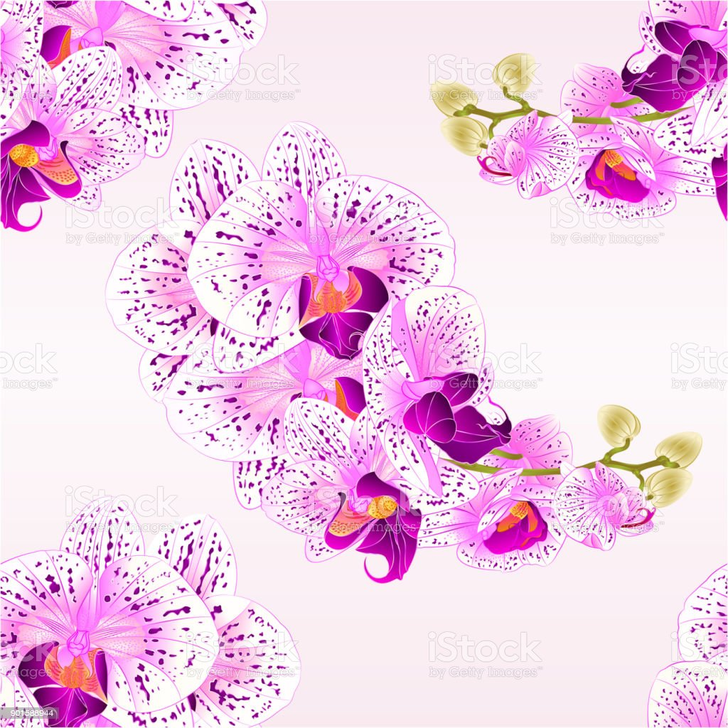 Seamless texture stem orchids purple and white flowers phalaenopsis seamless texture stem orchids purple and white flowers phalaenopsis tropical plant vintage vector botanical illustration for mightylinksfo
