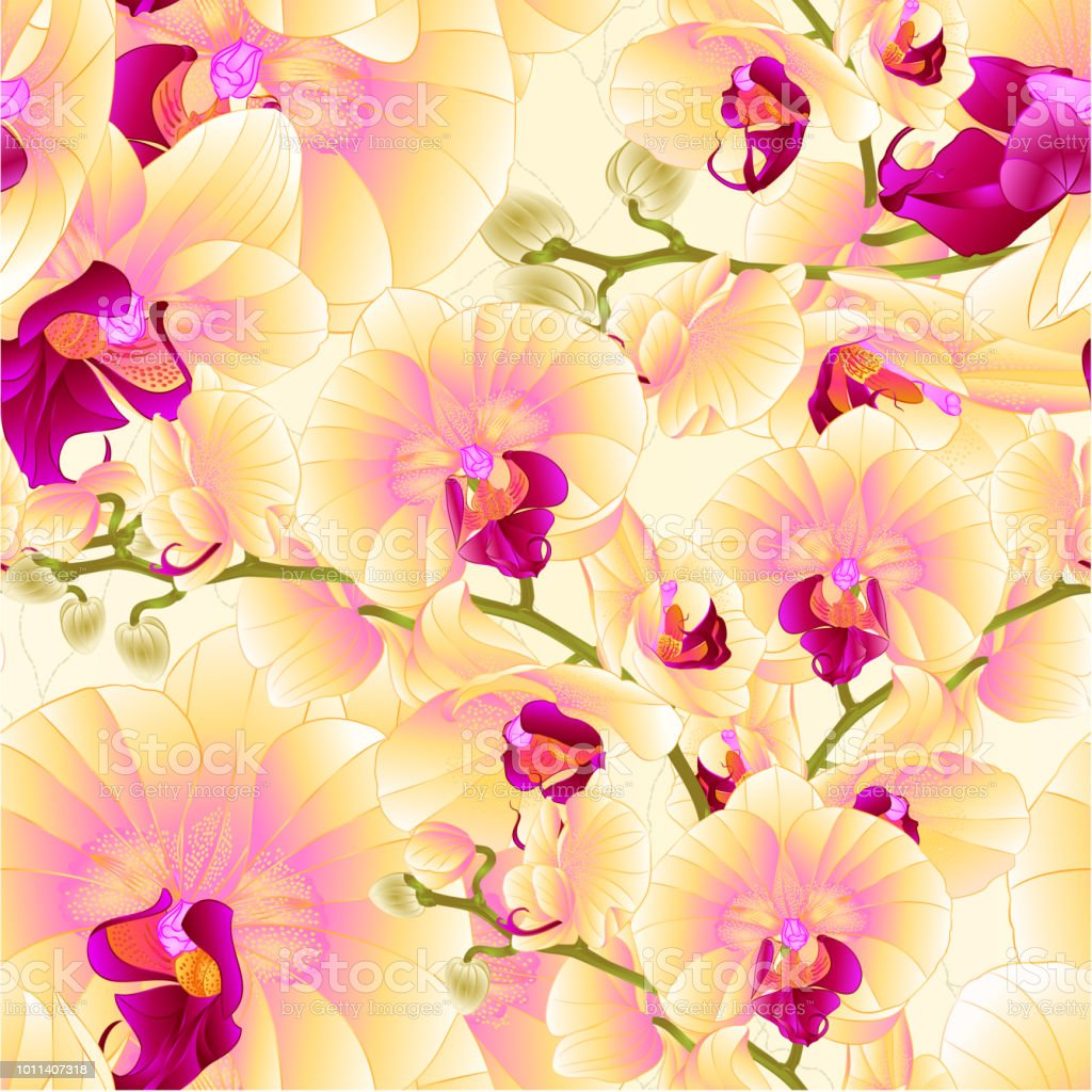 Seamless Texture Stems Orchids Yellow Flowers Phalaenopsis Tropical
