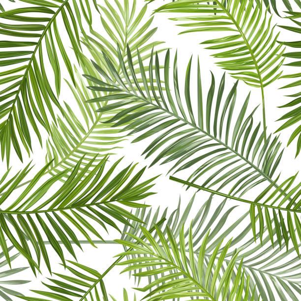 ilustraciones, imágenes clip art, dibujos animados e iconos de stock de hojas de fondo de palmeras tropicales sin fisuras para el diseño álbum de recortes - fiesta en el jardín