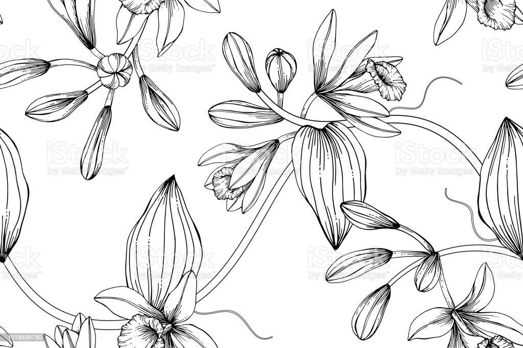 Vetores De Sem Costura Baunilha Flor De Fundo Preto E Branco