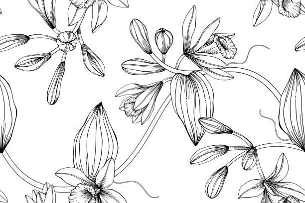stockillustraties, clipart, cartoons en iconen met naadloze vanille bloem patroon achtergrond. zwart en wit met het tekenen van de lijn kunst illustratie. - vanille