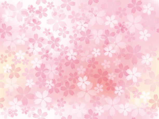 ilustrações de stock, clip art, desenhos animados e ícones de seamless vector background illustration with cherry blossoms in full bloom. - cherry blossoms