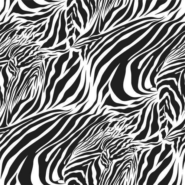 ilustrações de stock, clip art, desenhos animados e ícones de seamless vector black and white zebra fur pattern. stylish fashionable wild zebra print. animal print background for fabric, textile, design, advertising banner. - padrões zebra