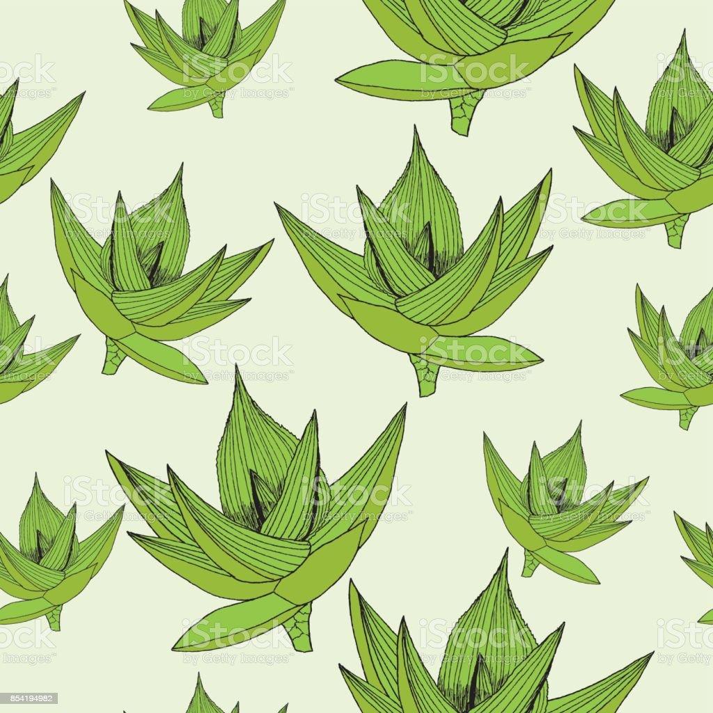 Ilustración de Transparente Vector Floral De Fondo Con Aloe Vera ...