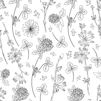 Seamless vector floral pattern, Chicory flower, medical endive field plant, Red clover, shamrock hand drawn illustration, doodle sketch isolated on white background, for design packaging, cosmetic