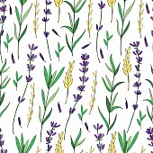 Seamless vector floral pattern, hand drawn colorful Lavender flower, decorative texture, sketch isolated on background, design for wallpaper, textile, fabric, greeting card, wedding invite, cosmetic