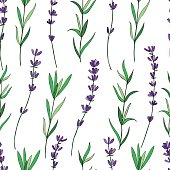 Seamless vector floral pattern, hand drawn graphic Lavender flower, decorative texture, sketch isolated on background, for wallpaper, textile, fabric, design packaging, scrapbooking, wedding cards