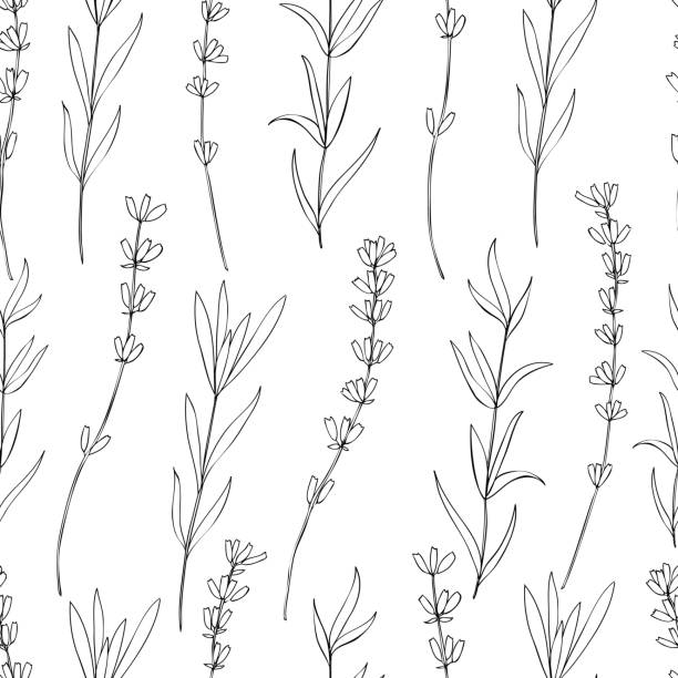 Seamless vector floral pattern, hand drawn graphic Lavender flower, decorative texture, sketch isolated on background, for wallpaper, textile, fabric, design packaging, scrapbooking, wedding card Seamless vector floral pattern, hand drawn graphic Lavender flower, decorative texture, sketch isolated on background, for wallpaper, textile, fabric, design packaging, scrapbooking, wedding cards lavender plant stock illustrations