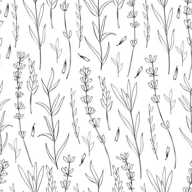 Seamless vector floral pattern, hand drawn Lavender flower, decorative texture, sketch isolated on white background, design for wallpaper, textile, fabric, greeting card, wedding invite, cosmetic Seamless vector floral pattern, hand drawn Lavender flower, decorative texture, ink sketch isolated on white background, design for wallpaper, textile, fabric, greeting card, wedding invite, cosmetic lavender color stock illustrations