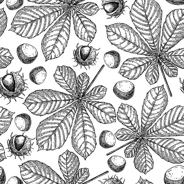 Seamless vector pattern with autumn leaves. Chestnut leaf and nu Seamless vector pattern with autumn leaves. Chestnut leaf and nuts drawing. Hand drawn detailed botanical background. Vintage fall seasonal decor. nu stock illustrations