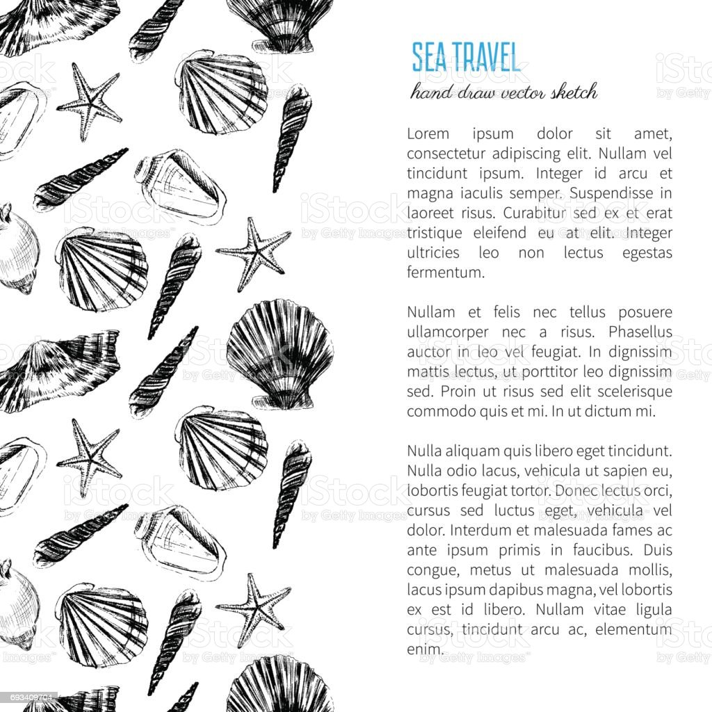 seashell hand drawn vector etching sketch isolated on white