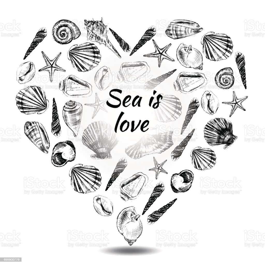 seashell heart hand drawn vector etching sketch isolated on white