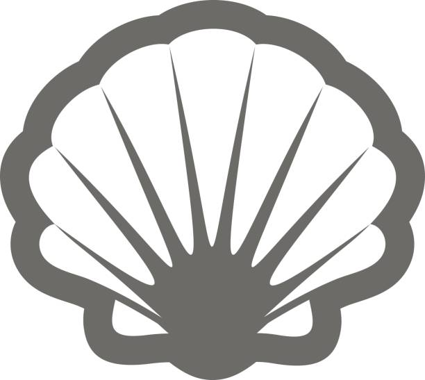 seashell outline icon. summer. vacation - scallop stock illustrations, clip art, cartoons, & icons
