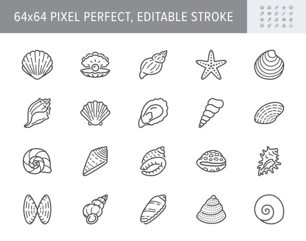 Seashell, oyster, scallop line icons. Vector illustration included icon as nautilus, spiral shell, starfish outline pictogram for beach mollusk infographic. 64x64 Pixel Perfect Editable Stroke Seashell, oyster, scallop line icons. Vector illustration included icon as nautilus, spiral shell, starfish outline pictogram for beach mollusk infographic. 64x64 Pixel Perfect Editable Stroke. mollusk stock illustrations
