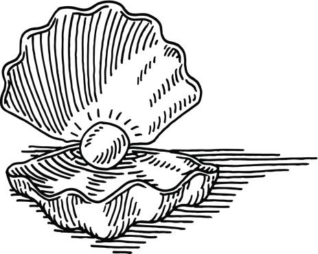 Seashell Pearl Drawing