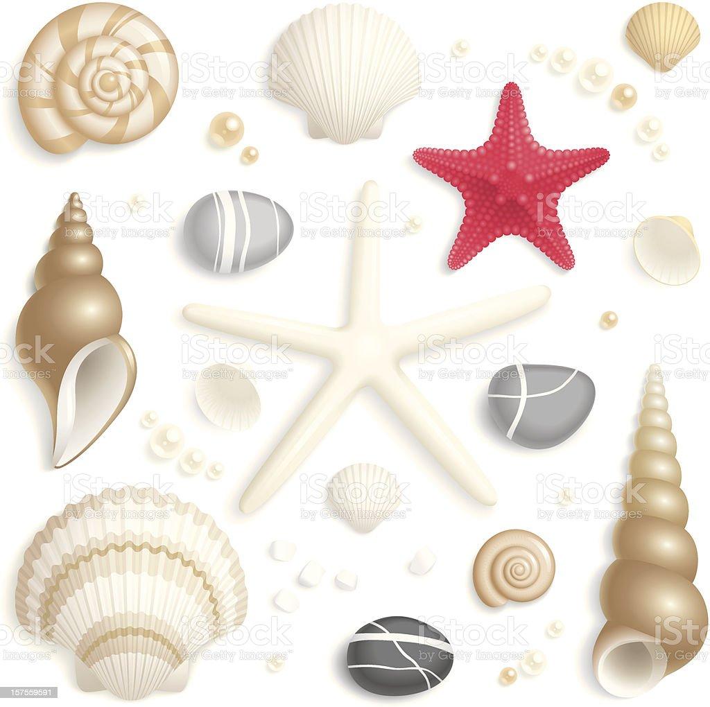 Seashell set vector art illustration