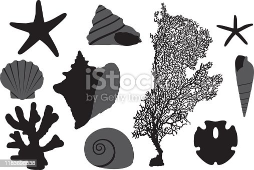 Vector silhouettes of a group of seashells.