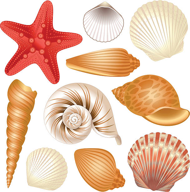 seashells collection - seashell stock illustrations, clip art, cartoons, & icons