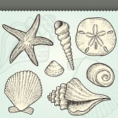 Seashells Craft Vintage Vector Elements Set