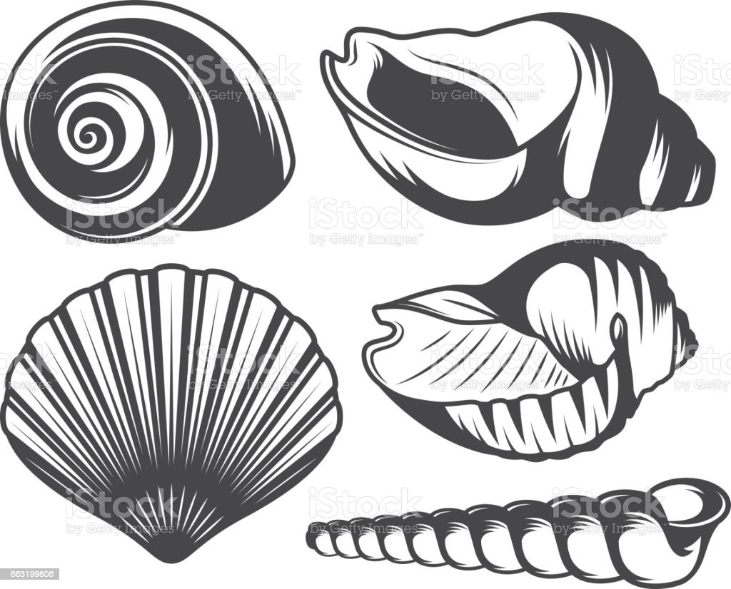 Seashells icons set vector art illustration