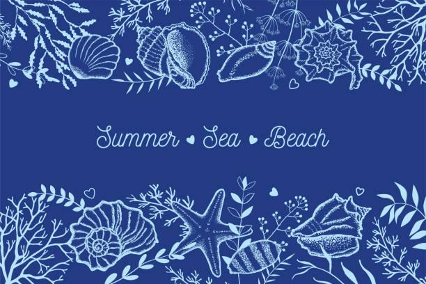 stockillustraties, clipart, cartoons en iconen met schelpen, zeewier en twijgen op een donkerblauwe achtergrond. - zeeschelp