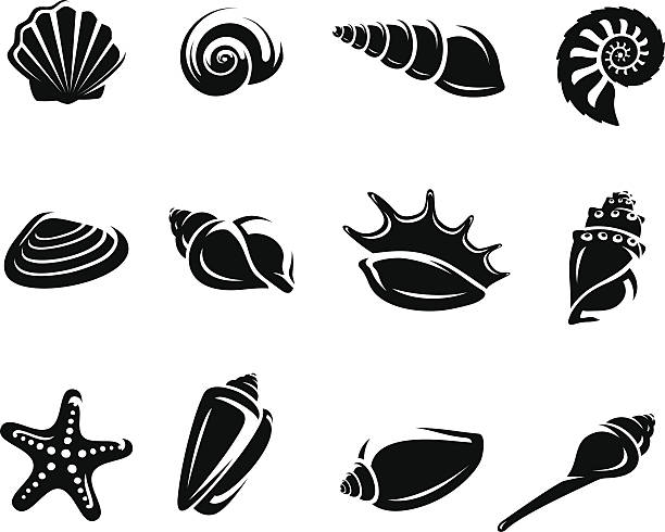 seashells set. vector - seashell stock illustrations, clip art, cartoons, & icons