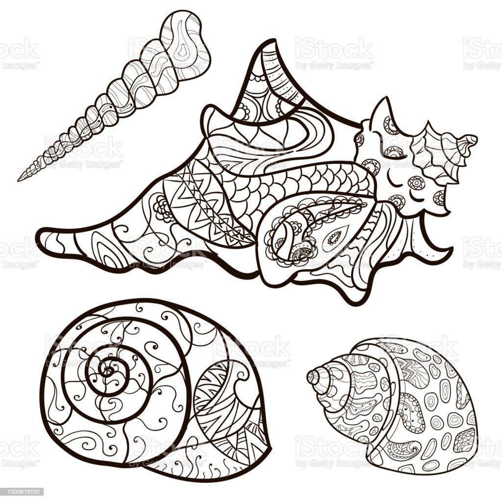Deniz Kabugu Kabuk Deseni Kabuk Ayari Boyama Kitabi Sayfa Vektor