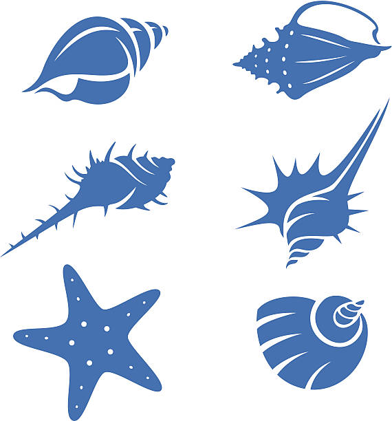 seashells - seashell stock illustrations, clip art, cartoons, & icons