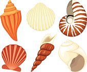 Vector illustration of a collection of seashells. Each shell is on its own layer, easily separated from the others in a program like Illustrator, etc. Illustration uses transparencies.  No gradients, meshes or blends of any kind, only solid color. Both .ai and AI10-compatible .eps formats are included, along with a high-res .jpg, and a high-res .png with transparent background.