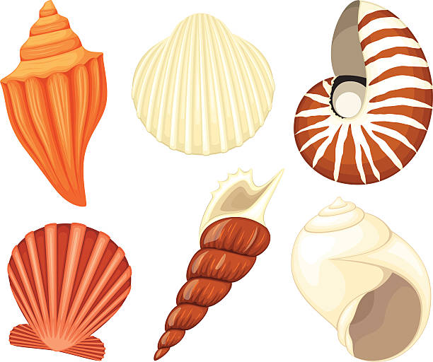 Royalty Free Conch Shell Clip Art, Vector Images ...